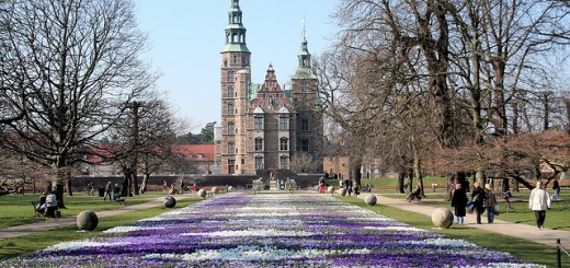 Crocus carpet in Kongens Have (King's Garden) in Copenhagen