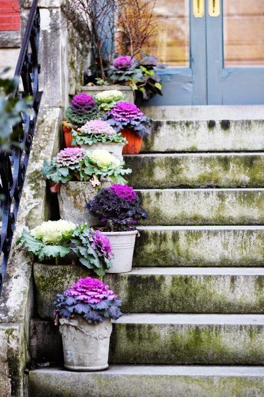 Cavoli ornamentali e bouquet da sposa originali blossom for Cavolo ornamentale