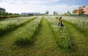 Montevrain_Park-Urbicus_landscape_architecture-09
