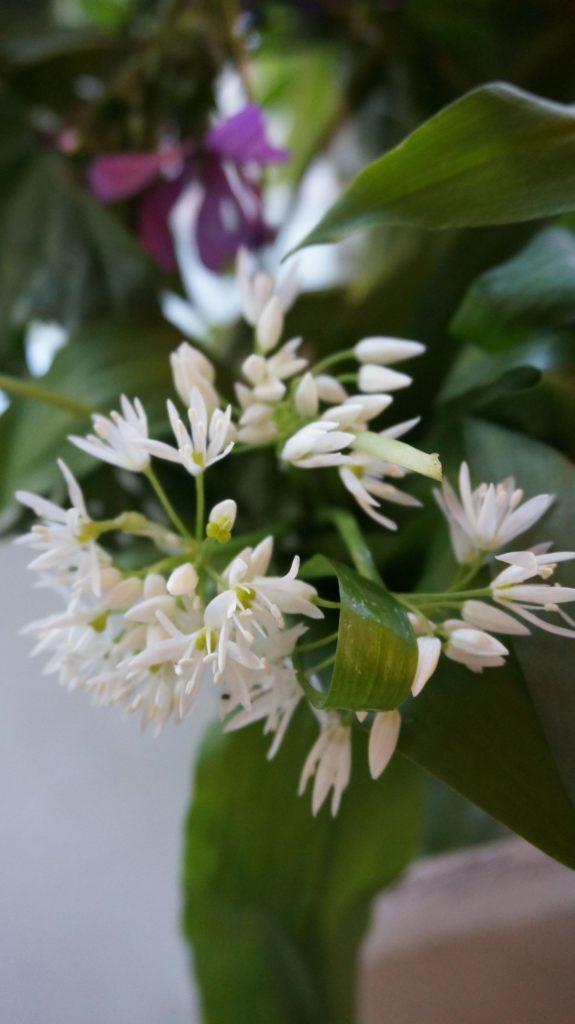 Blossom zine BLOG erbe spontanee4