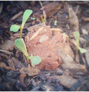 bombe di semi.2