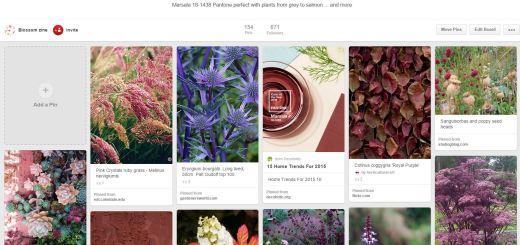 blossom zine marsala board pinterest1
