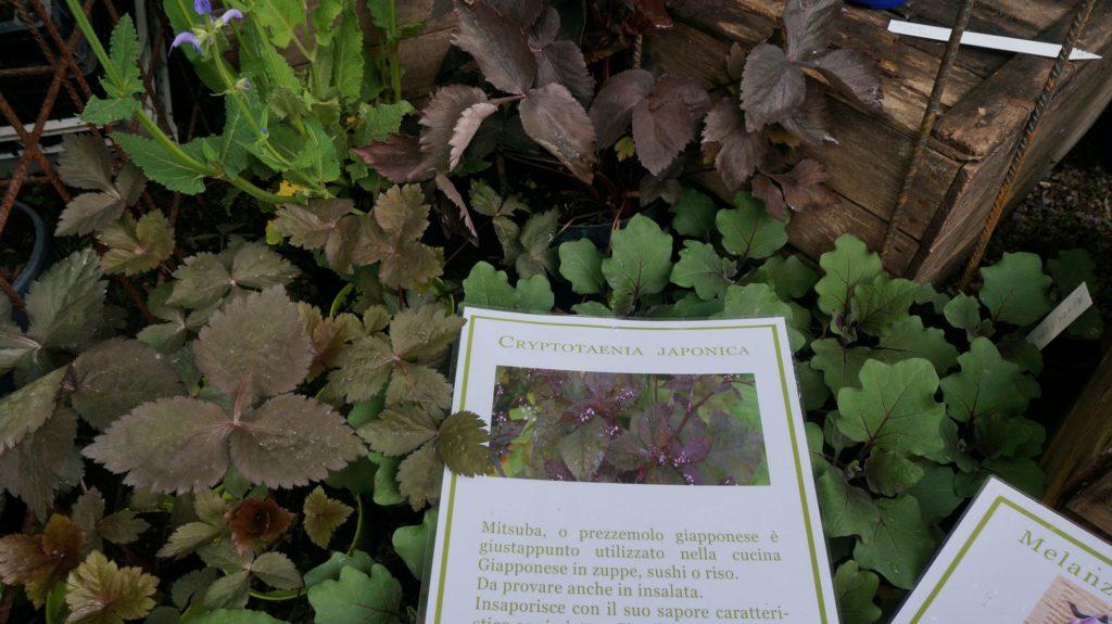 orticola 2015 blossom zine BLOG (11)