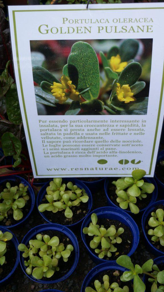 orticola 2015 blossom zine BLOG (12)