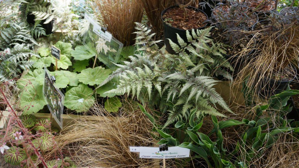 orticola 2015 blossom zine BLOG (22)