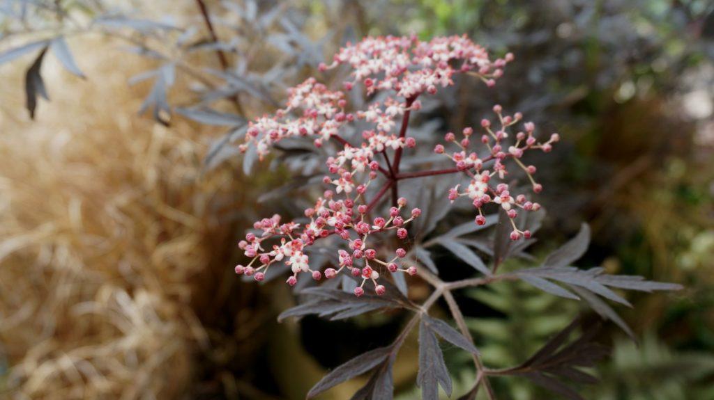 orticola 2015 blossom zine BLOG (23)