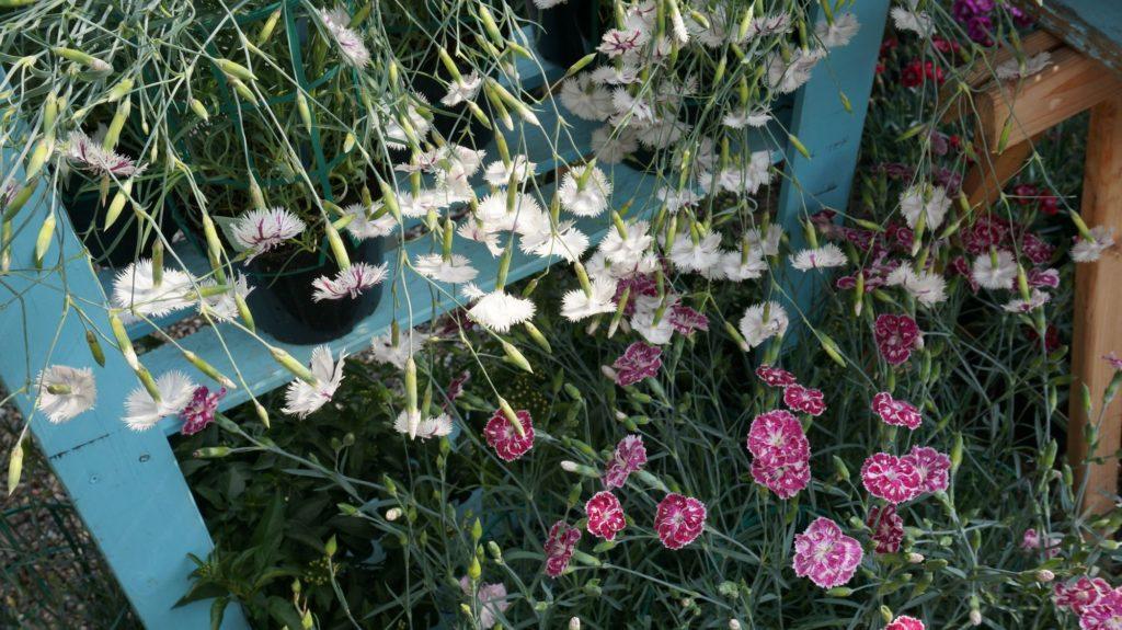 orticola 2015 blossom zine BLOG (3)