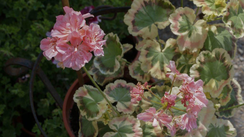 orticola 2015 blossom zine BLOG (34)