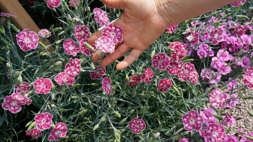 orticola 2015 blossom zine BLOG (4)