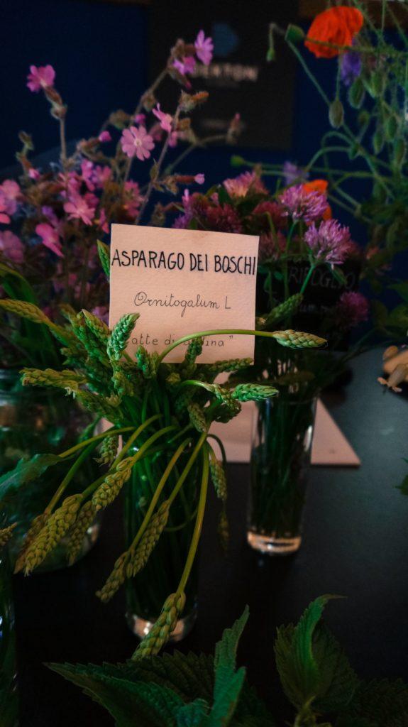 Blossom zine ortinfestival susigan papponi erbe_-14 (3)
