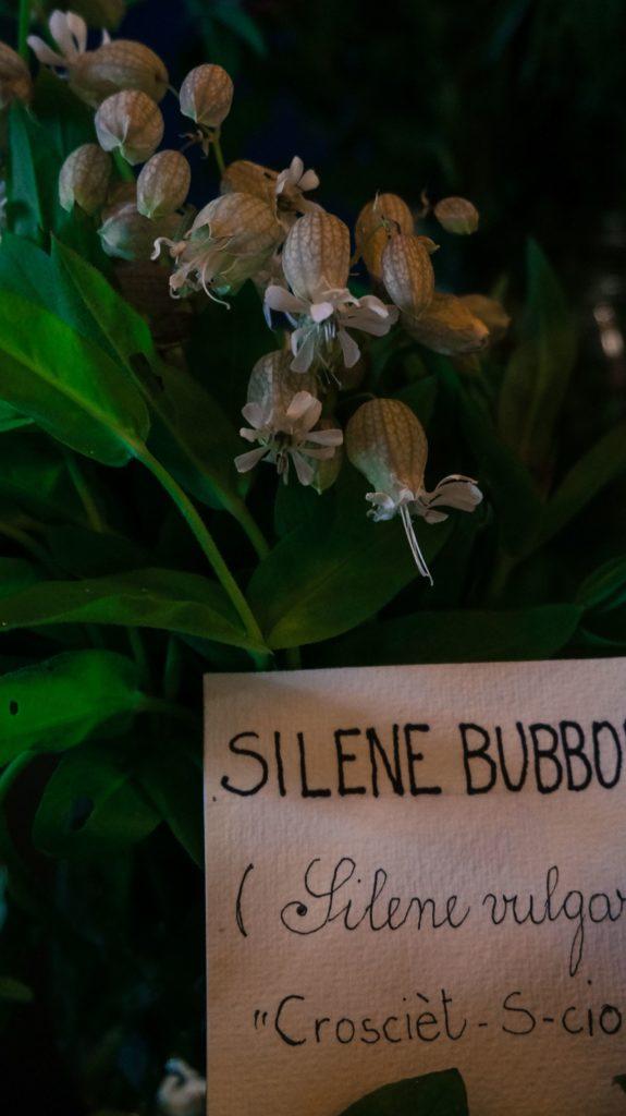 Blossom zine ortinfestival susigan papponi erbe_-14 (4)