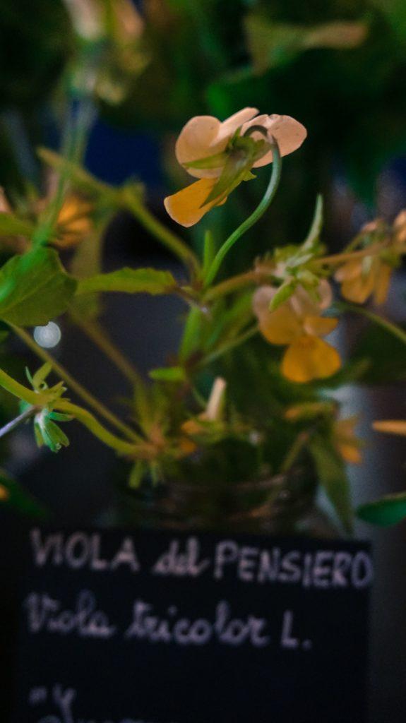 Blossom zine ortinfestival susigan papponi erbe_-14 (9)