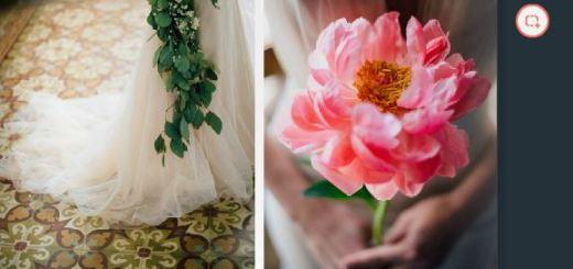 blossom zine n9  la rosa canina2