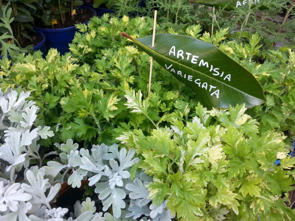 Blossom zine Gressoney Artemisia 2015 .3