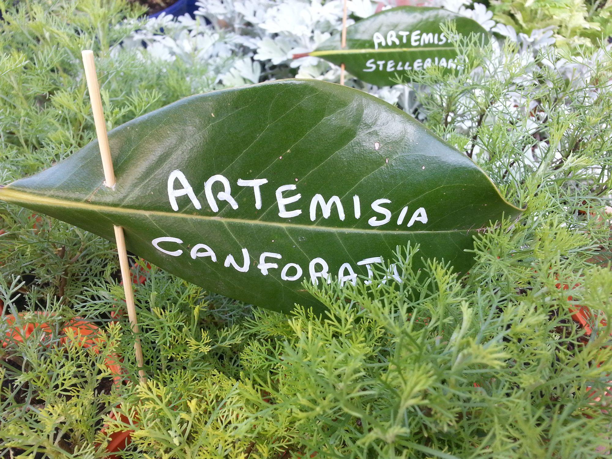 Blossom zine Gressoney Artemisia 2015 .5