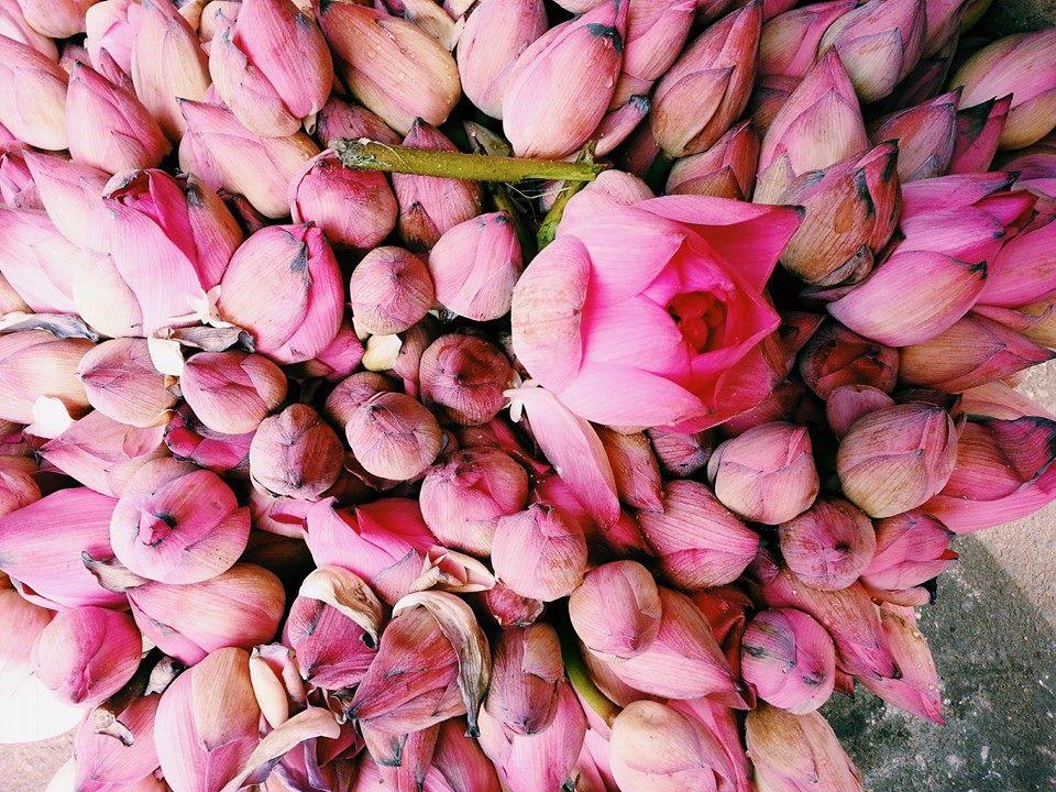 Blossom zine viaggio in Sri Lanka 2