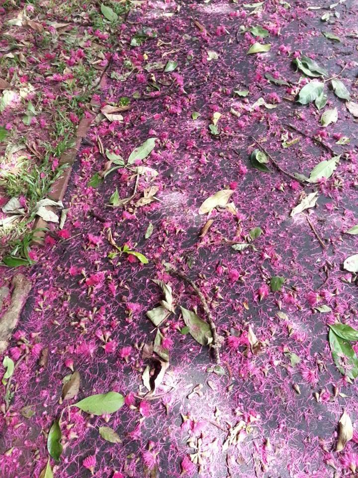 Blossom zine viaggio in Sri Lanka 4