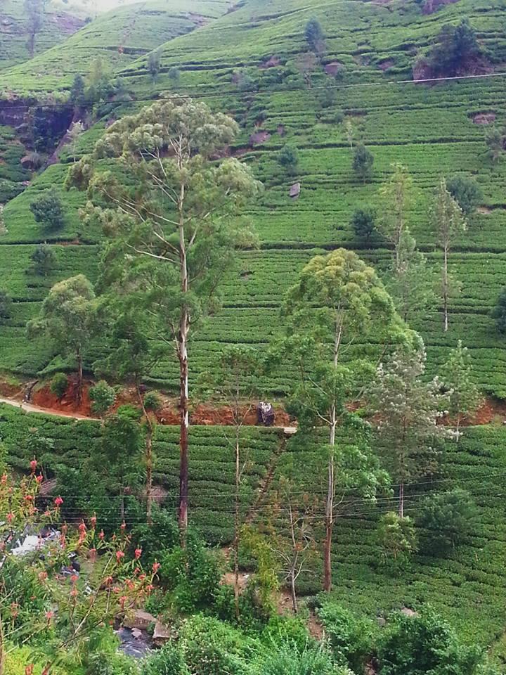 Blossom zine viaggio in Sri Lanka 7