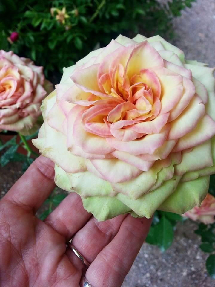 Blossom zine blog Perugia Flower Show 2015 (1)