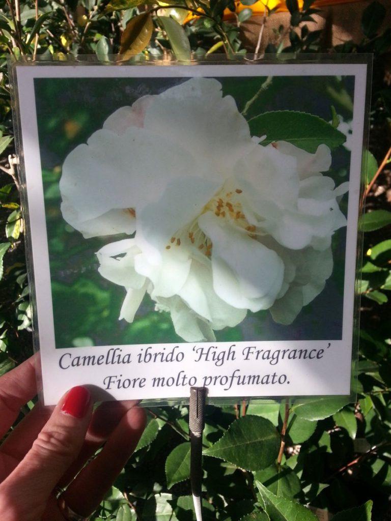 Blossom zine blog Perugia Flower Show 2015 (4)