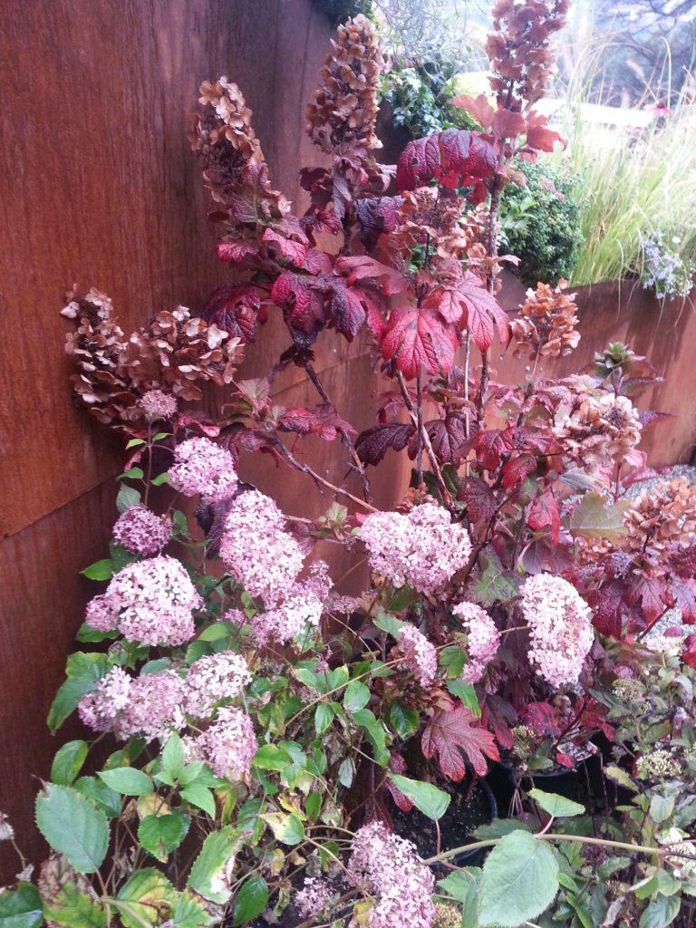 orticolario, blossom zine  giardino Concluso con tatto di Roberto Benatti di Giardini Benatti