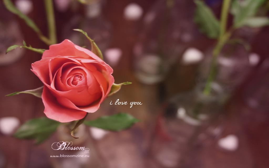 Blossom zine  sfondo PC iloveyou