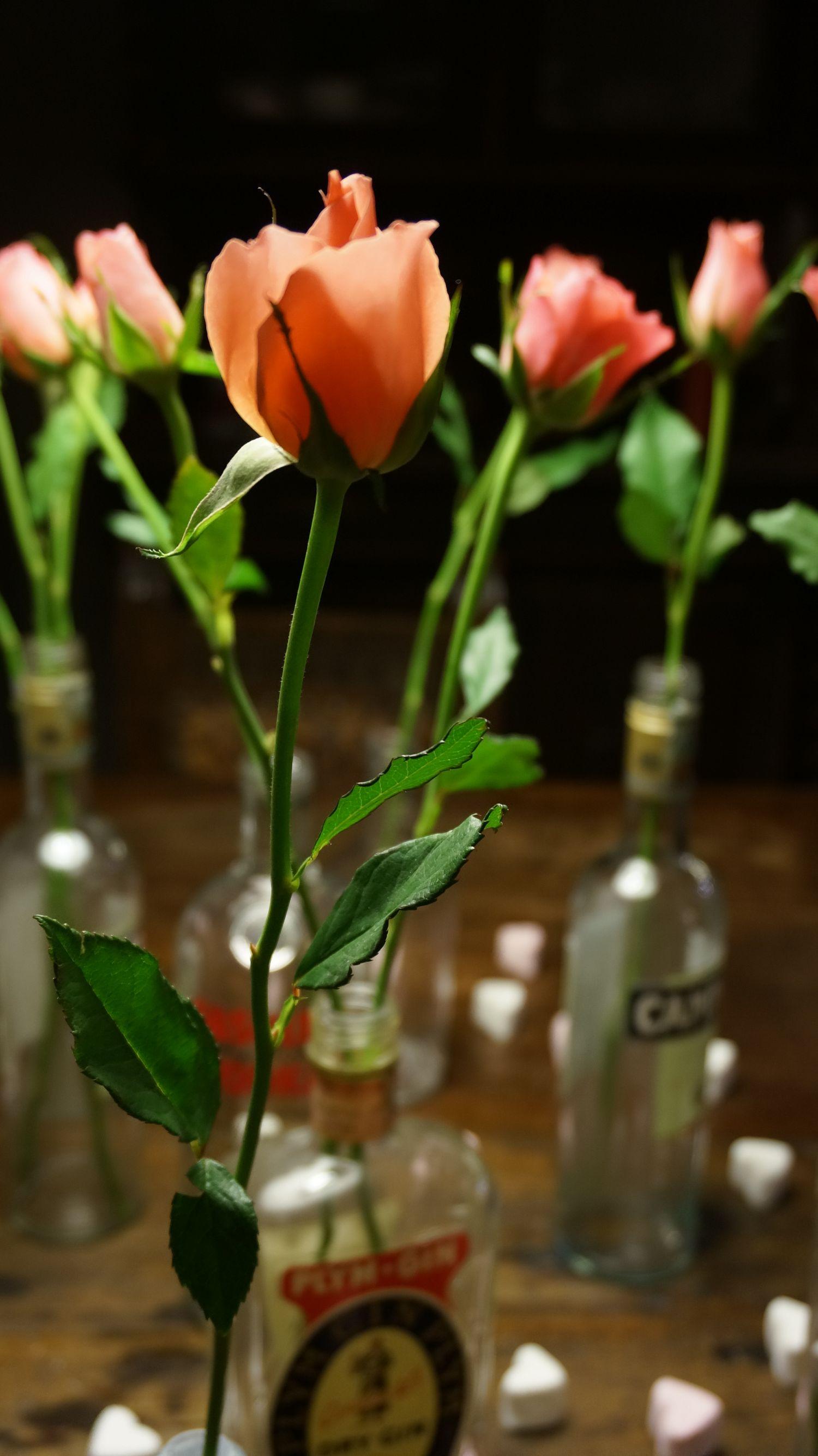 blossom zine blog san valentino3