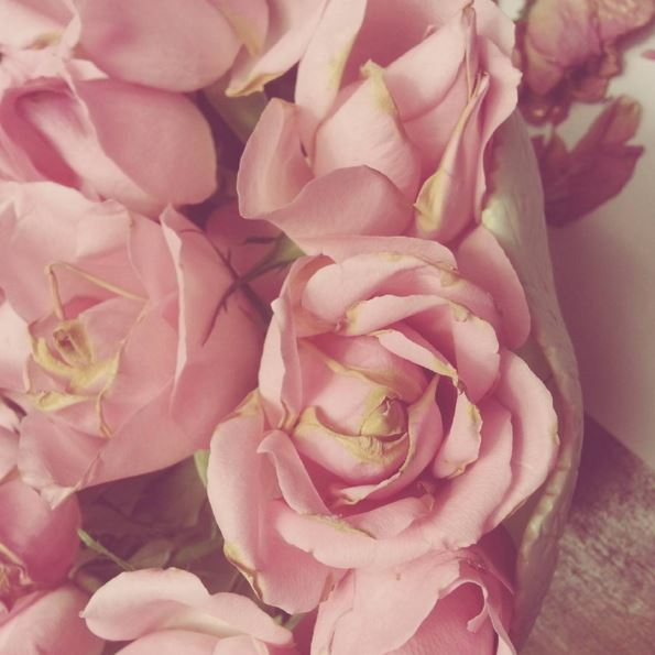 petaloso Blossom zine PH
