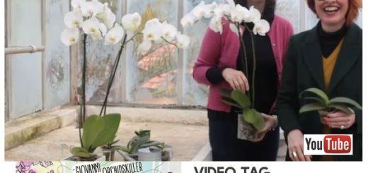 MINIATURA video tag giovanni br