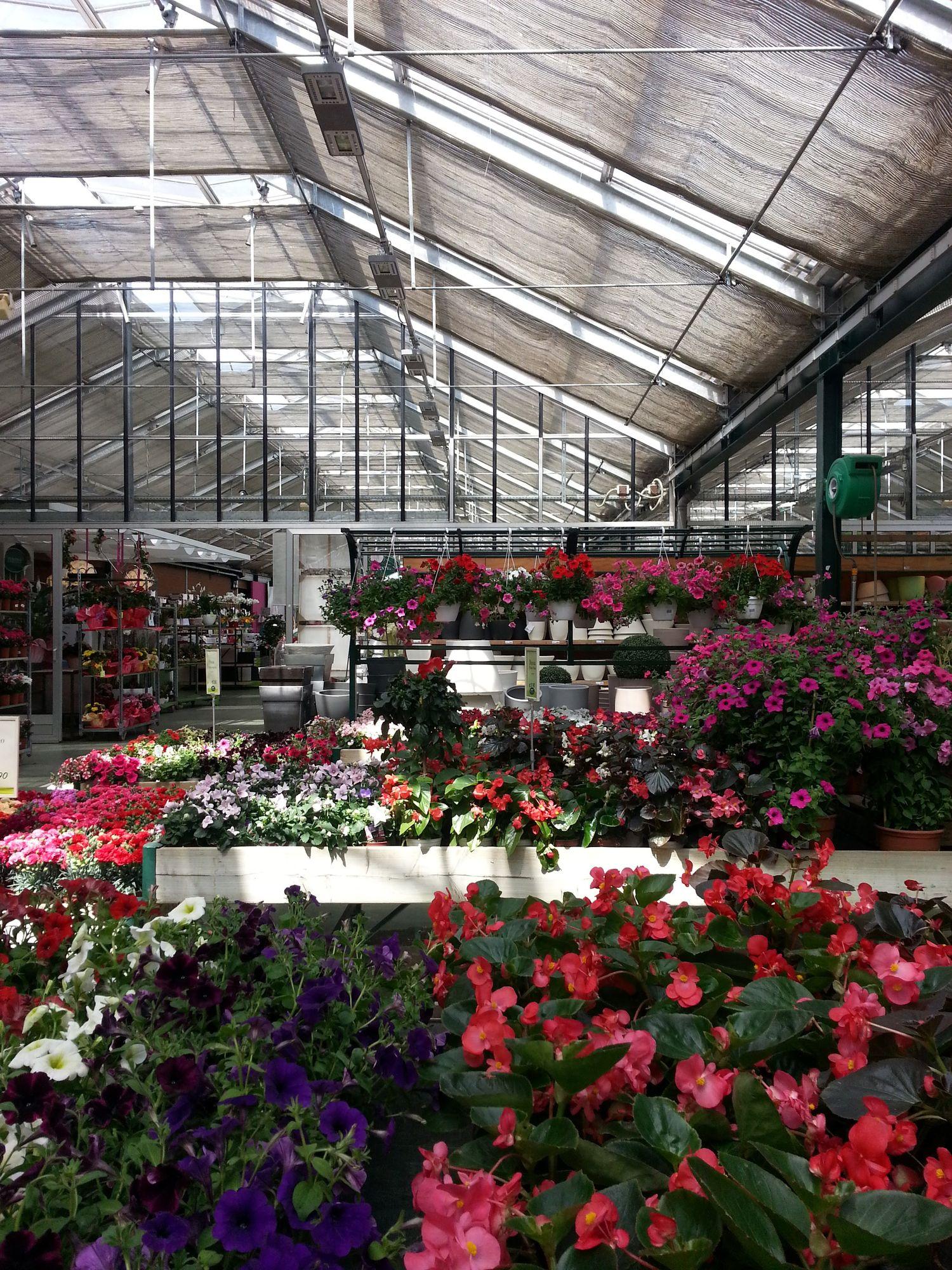 viridea about garden workshop (6)