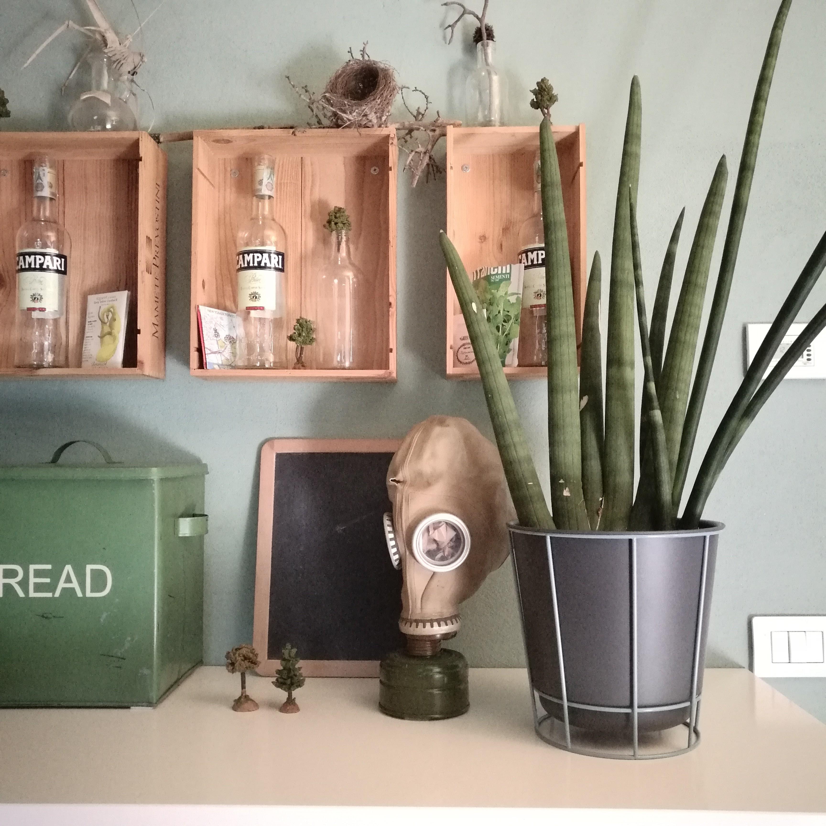 Come arredare casa con le piante blossom zine blog for Arredare casa blog