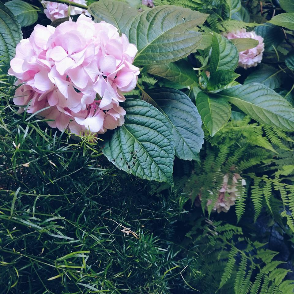 blossom zine ortensie 3