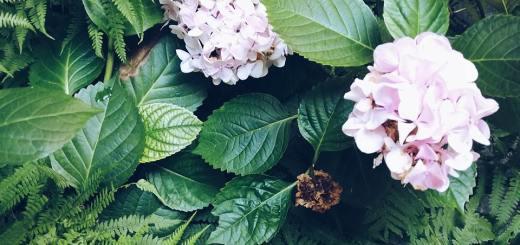 blossom zine ortensie 4