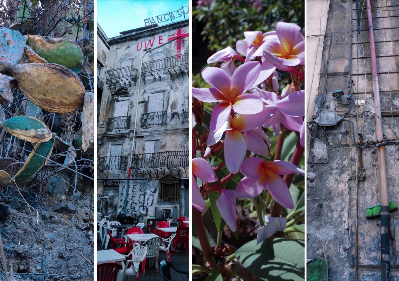 Blossom zine e la sicilia 6