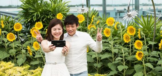 Sunflower-Garden-1024x683