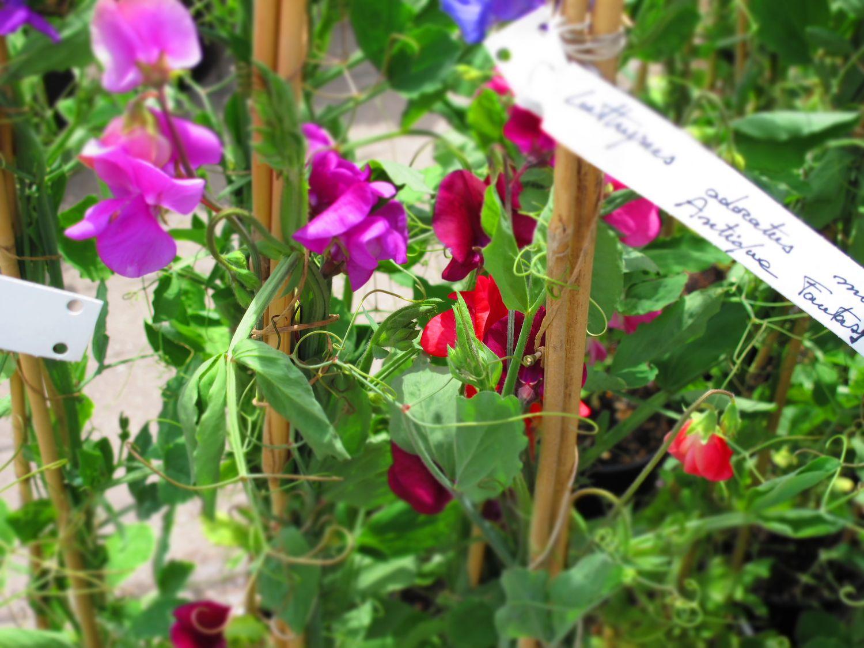 blossom zine orto decorativo da viridea 3