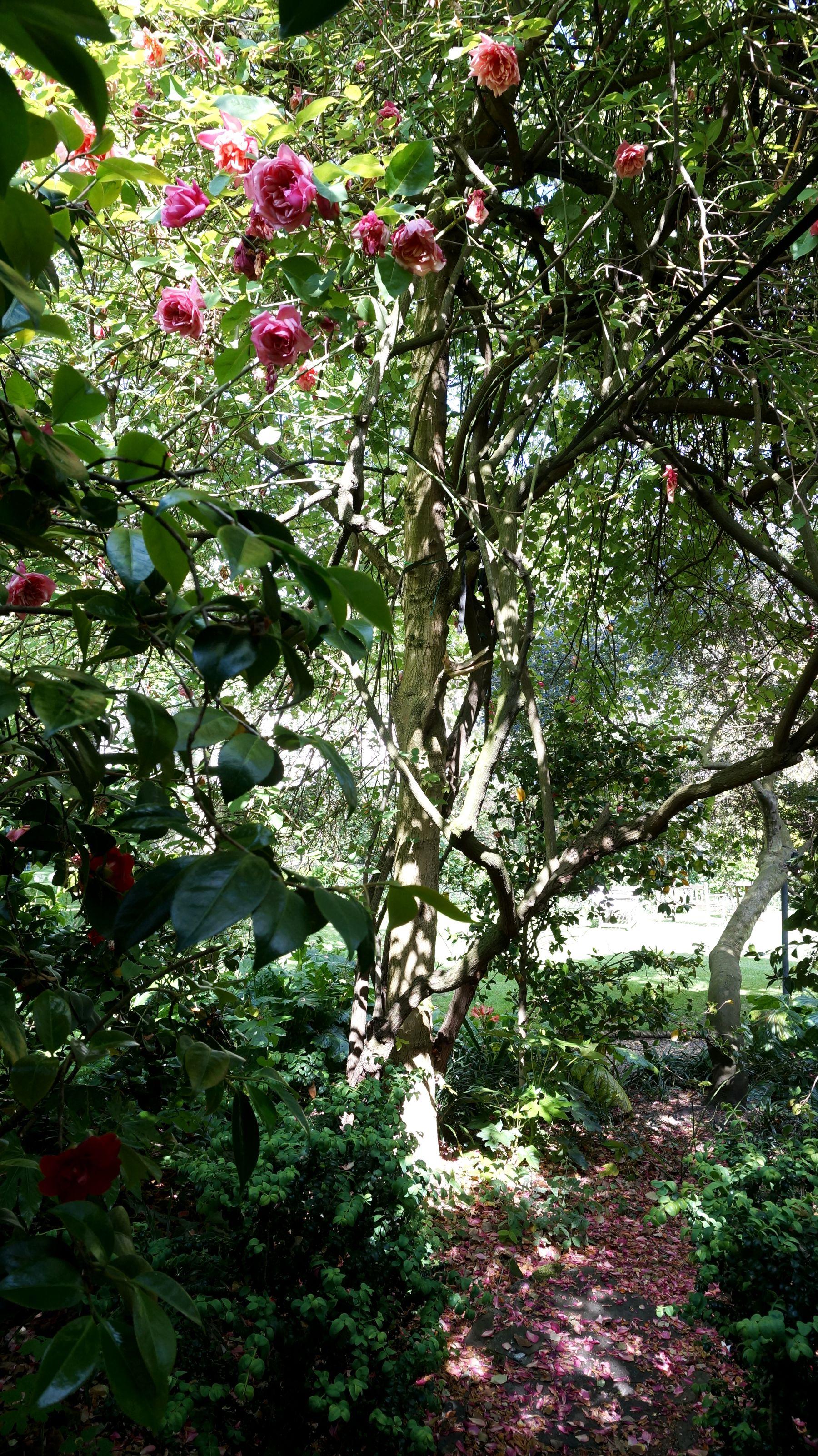 blossomzine verdemax 9
