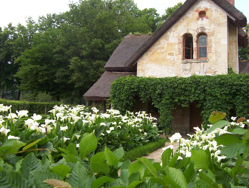 le petit trianon blossom zine (1)