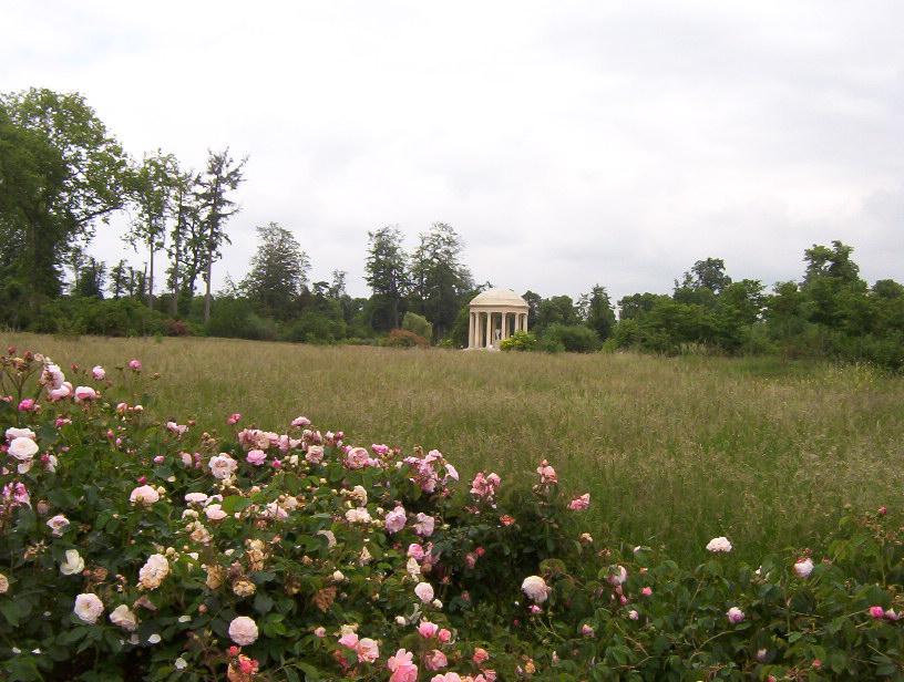le petit trianon blossom zine (3)