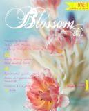 cover 4 spring Blossom zine