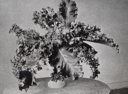 CONSTANCE SPRY British floral designer