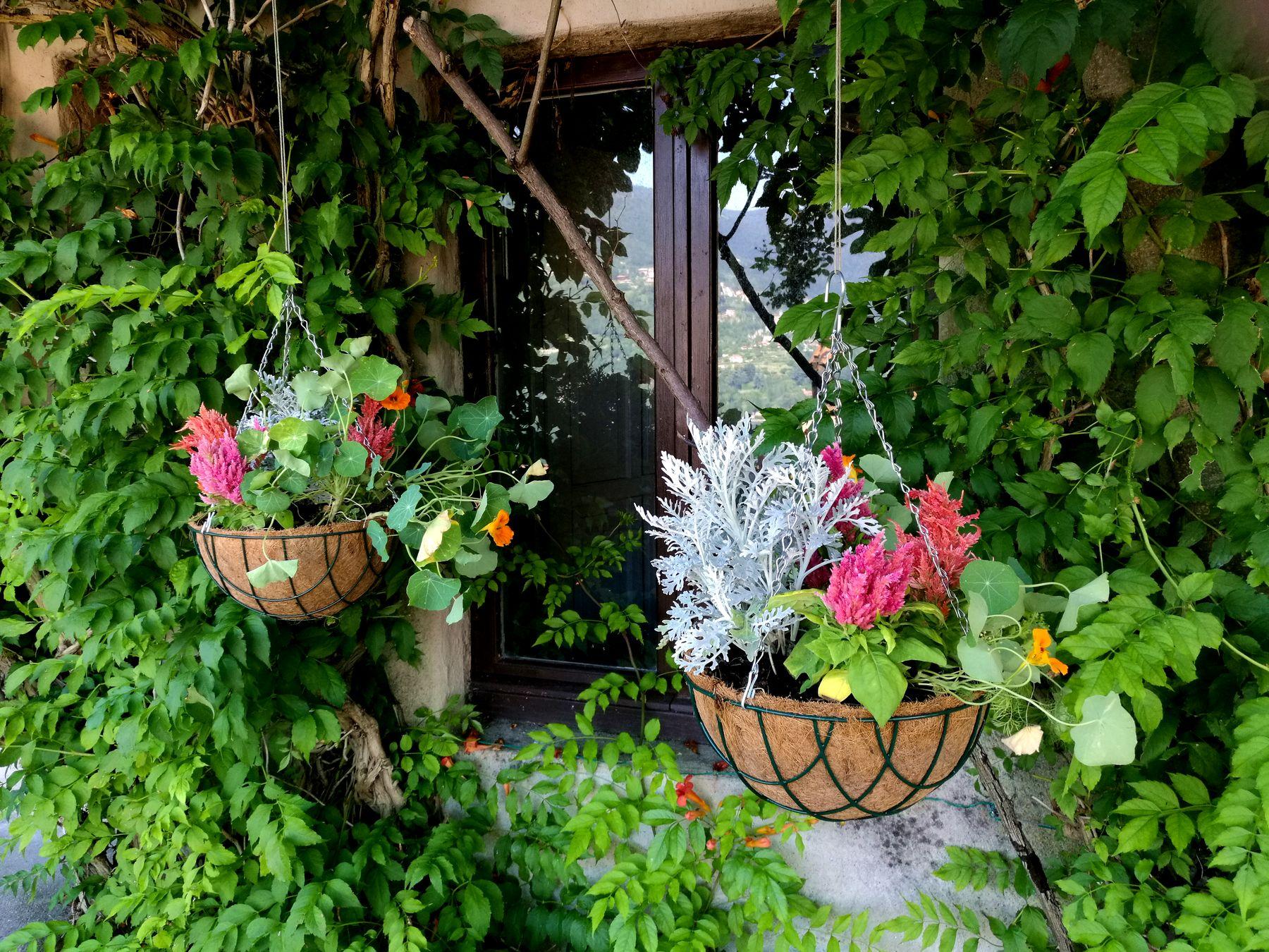Cesti appesi in fibra di cocco molto chic e molto british - Begonia argentata ...