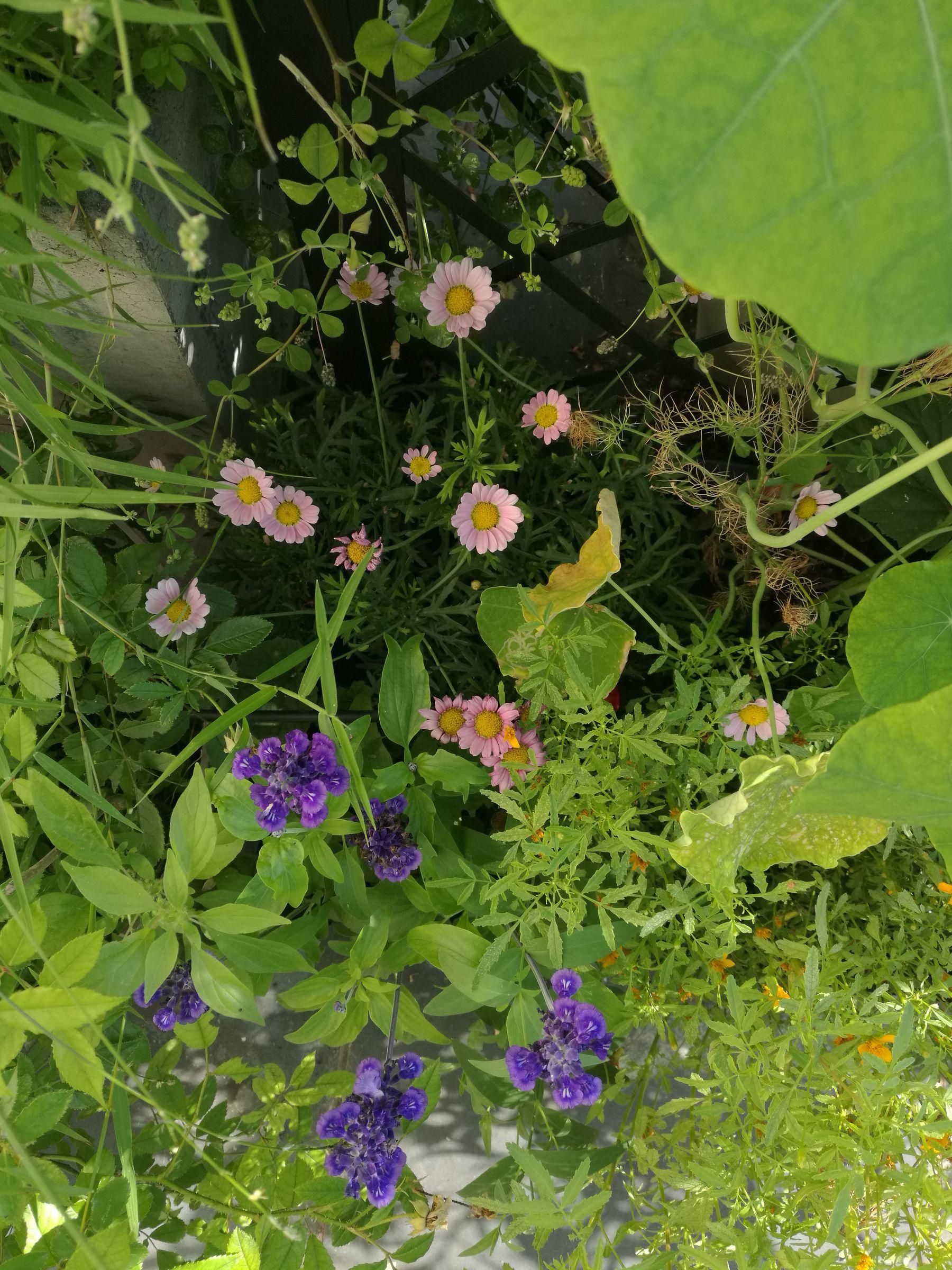 Blossom zine terrazzo PRIMA e DOPO Verdemax