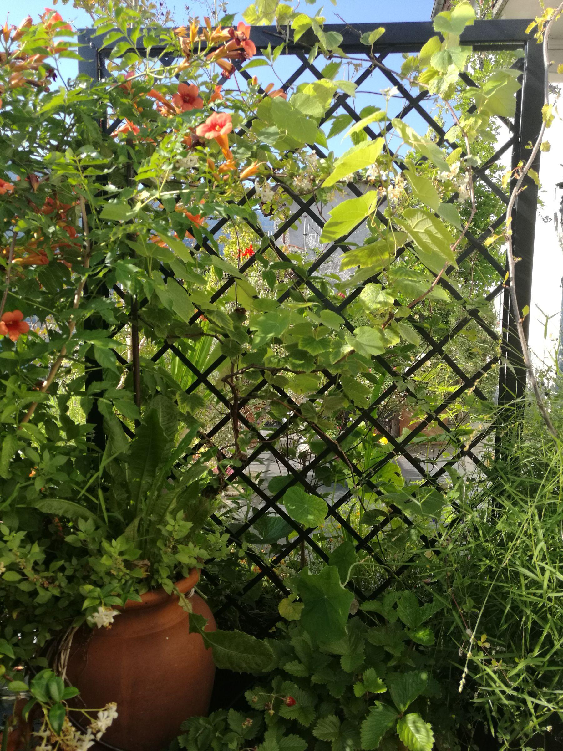 Blossom zine terrazzo treillage retro Verdemax