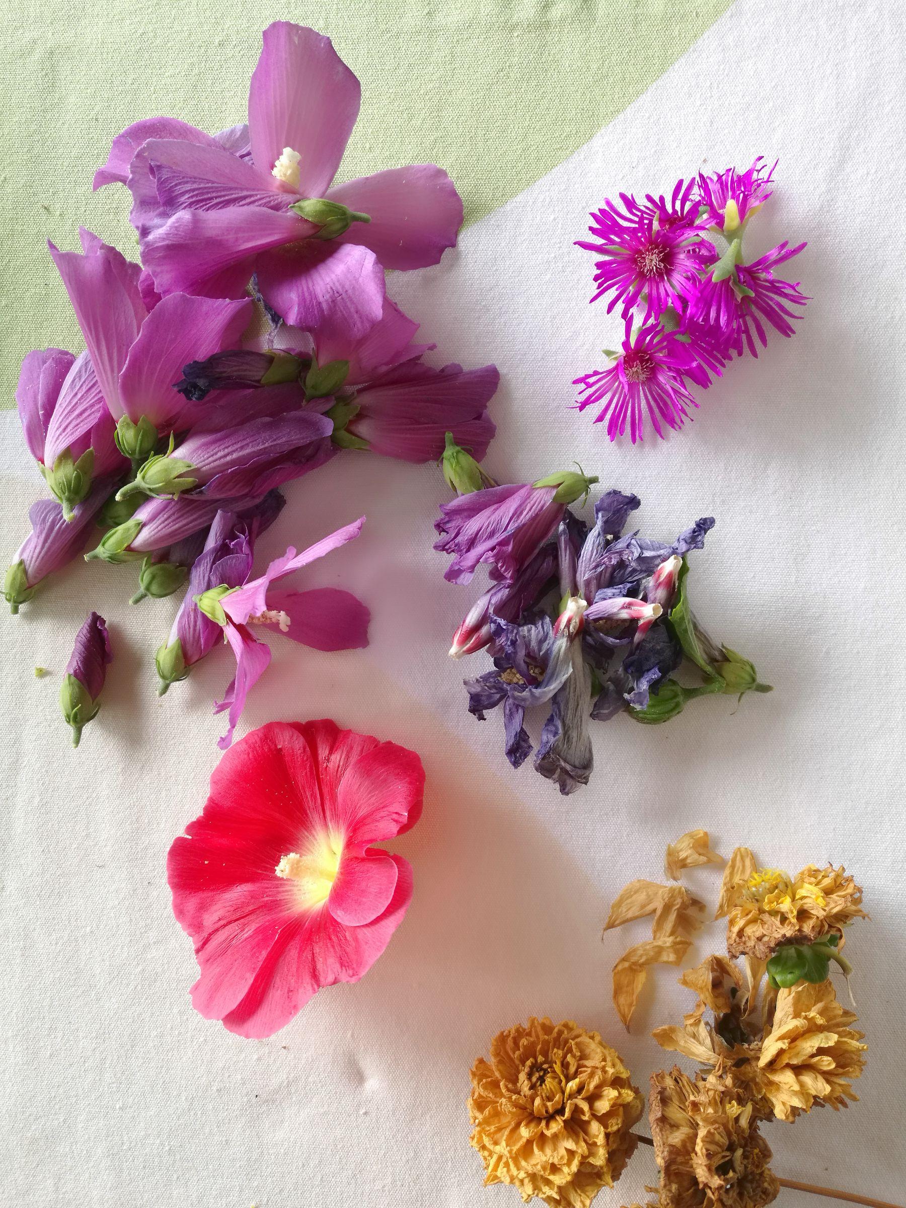 blossom zine tingere con i fiori