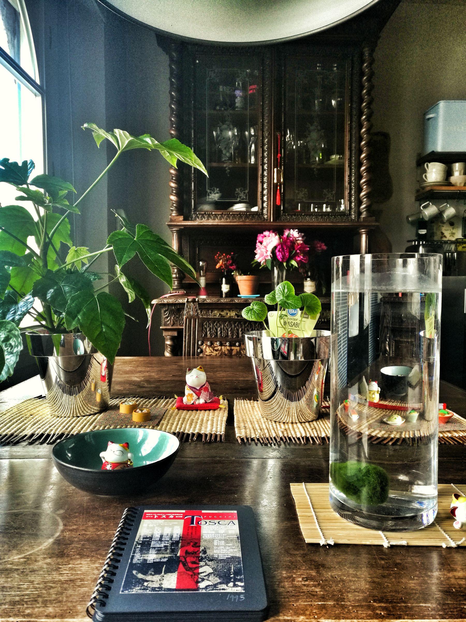 piante giapponesi in casa Blossom zine