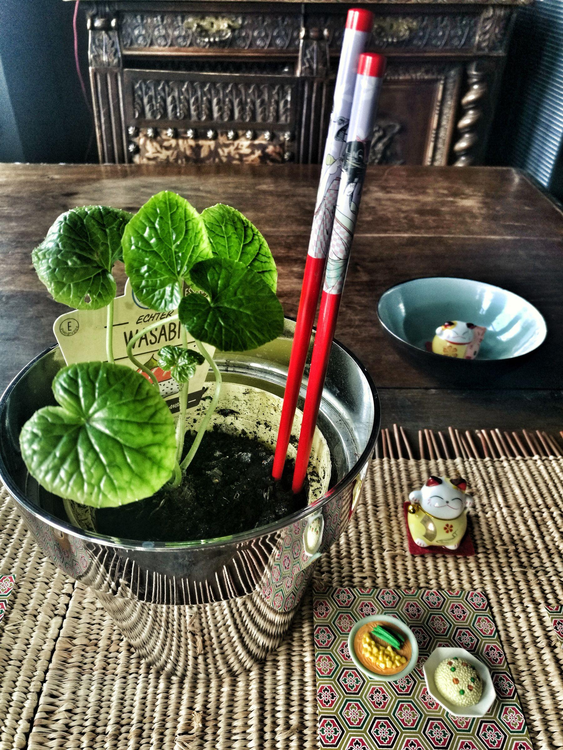wasabi a casa Blossom zine