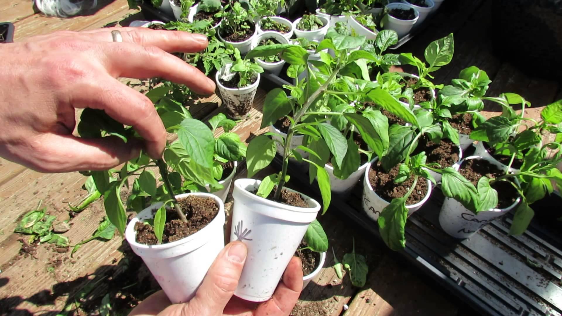 Quali lavori di giardinaggio effettuare ad inizio primavera?