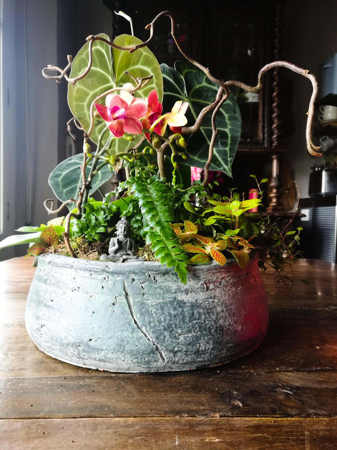 Blossom zine composizione piante da interno