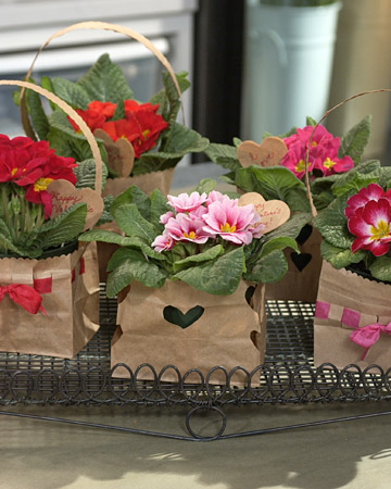Primizie Di Primule Per San Valentino Blossom Zine Blog